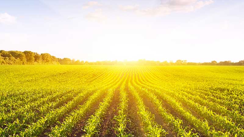 MP Weiler announces program open to applicants to help farmers and agri-businesses develop and adopt clean technologies
