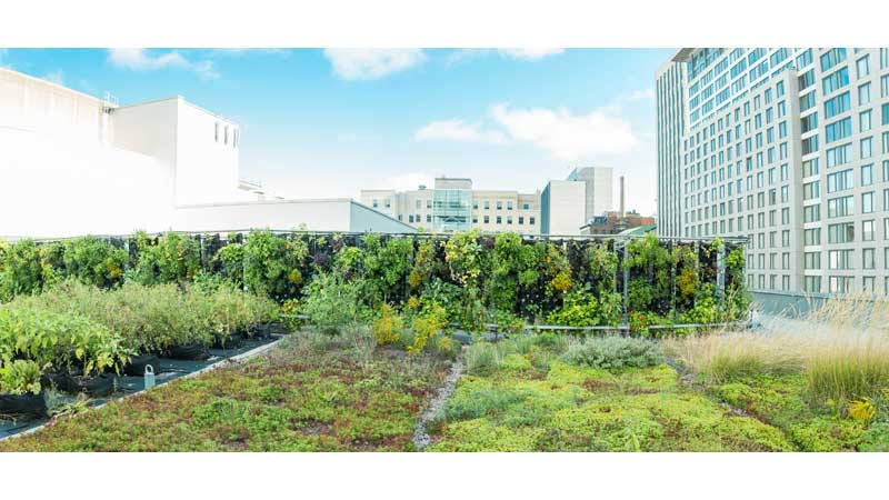Launch of MontréalCulteurs - A program that combines agriculture and urban living!